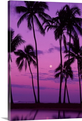 Palm trees with moon in a bright pink and purple sky, reflecting on still water.