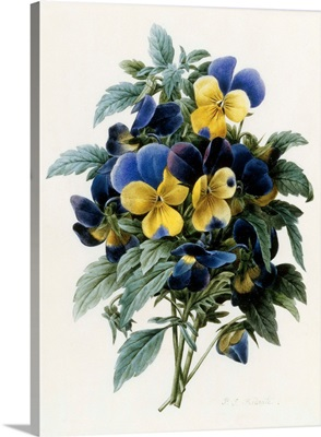 Pansies By Pierre Joseph Redoute