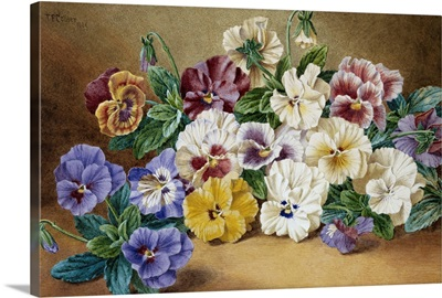 Pansies By Thomas Frederick Collier