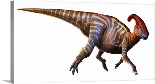 Parasaurolophus ('near-crested lizard'), first described in 1922