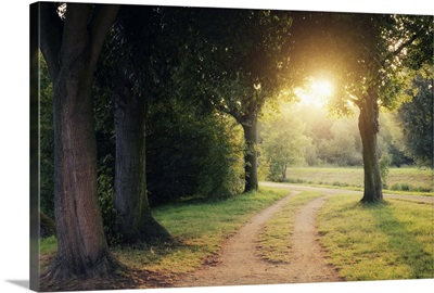 Path in park at sunset.