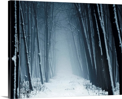Path leading into mysterious forest in snow and fog.