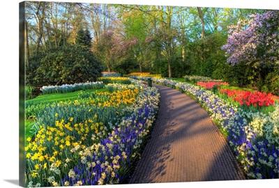 Pathway In Kuekenhof Gardens With Hyacinths, Daffodils, Tulips, Holland