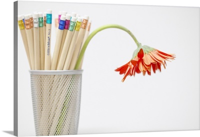 Pencils and wilting flower in cup