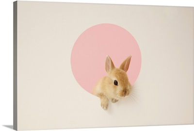 Pet bunny in a small window