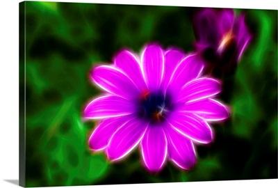 Picture of flowers, fractalize, fractal image