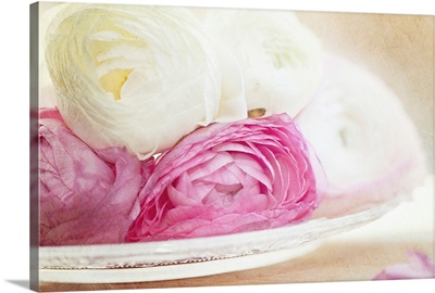 Pink and white ranunculus flowers in glass plate.