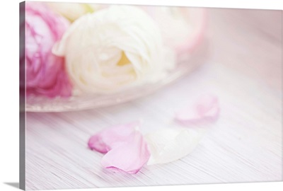 Pink and white ranunculus flowers in glass plate with fallen petals on side.