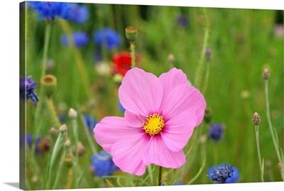 Pink flower macro.