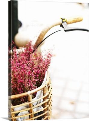 Pink flowers in bicycle basket.