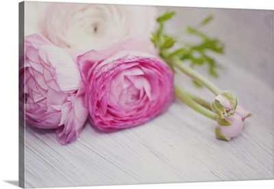 Pink ranunculus flowers on white wooden shelf.