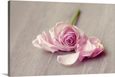 Pink rose falling apart on wooden table.