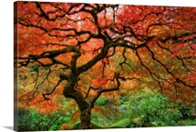 Portland, Oregon's Japanese garden.