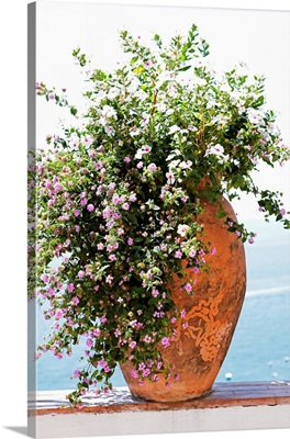 Pot plant on surrounding wall, close-up