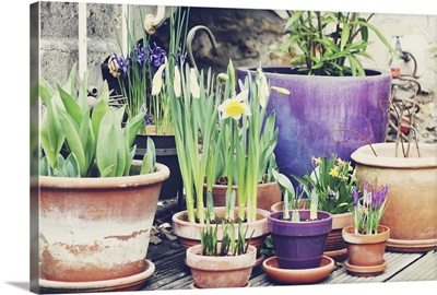 Potted plants of different size.