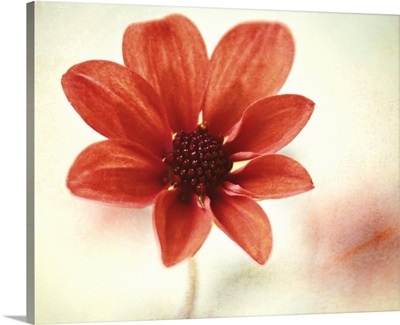 Pretty orange flower.