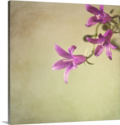 Purple bell shaped flowers against green background.