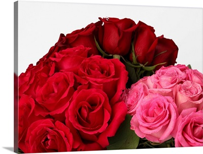 Red, deep red and pink roses