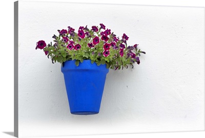 Red flowers in blue vase, on whitewhashed wall