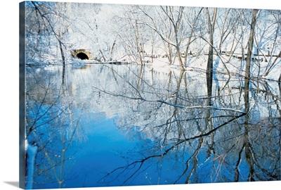 Reflection of bare trees in a lake, Minneapolis, Minnesota, USA