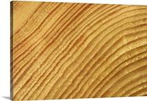 Rings of a log