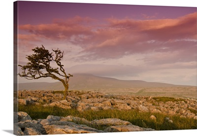 Rocky landscape with lone tree in sunset.