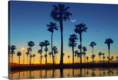 Row of palm trees and half moon over palm tree.