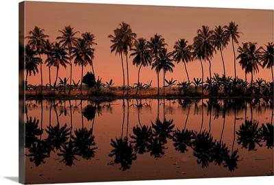 Row of palm trees during sunset at Kumarakom, India.