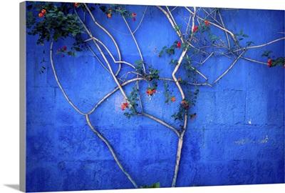 Santa Catalina Convent Tree, Peru
