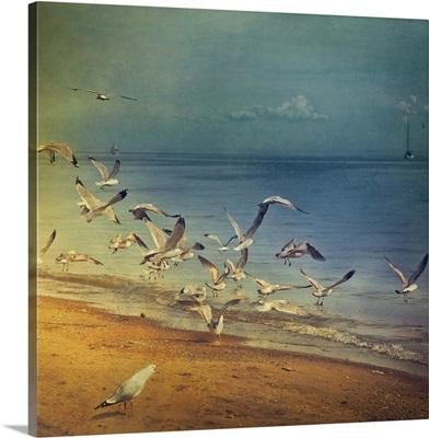 Seagulls flying on lakeshore of Lake Ontario.