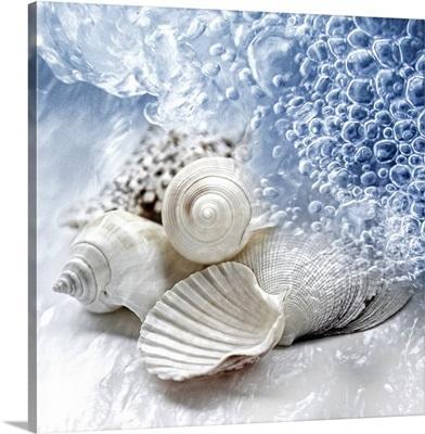 Seashells washed ashore