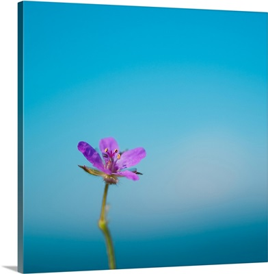Side capture of little purple flower standing against blue sea and sky bokeh background.