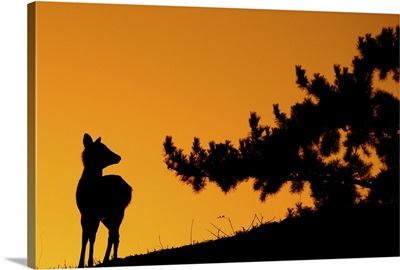Silhouette deer on  mountain at sunset.