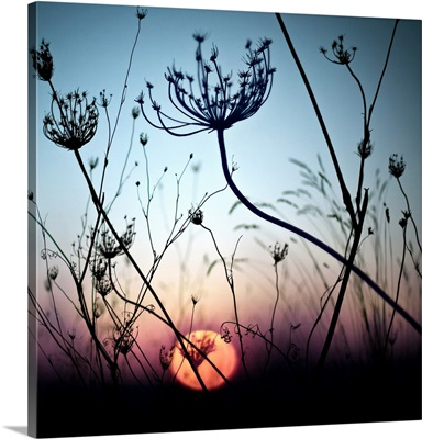 Silhouette flower with sunset in background.