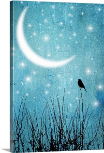 Silhouette of one bird and branches against a blue starry night with a quarter moon.