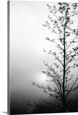 Silhouette of tree on overcast morning