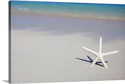 Single starfish stuck in beach sand.