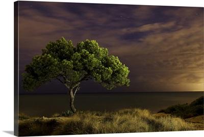 Single tree at night with omnious sky, Spain.