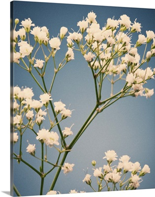 Small white flowers, vintage film color