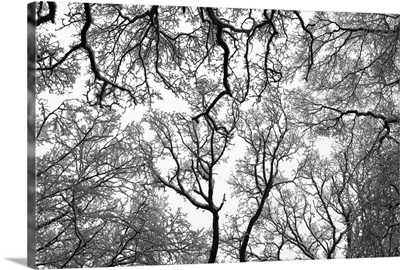 Snow covered treetops, London.
