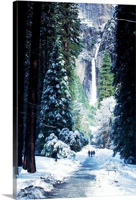 Snowy scene, Yosemite National Park, California