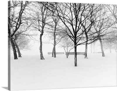 Snowy trees and park benches in park.