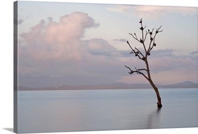Sparrow nests in solitary tree off coast of Malapascua Island.