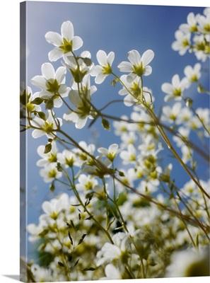Spring flowers against sky.