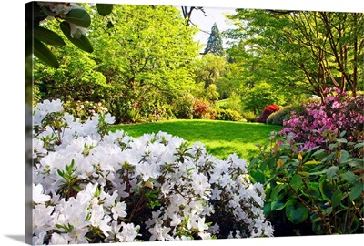 Spring Flowers In Crystal Springs Rhododendron Garden, Portland, Oregon