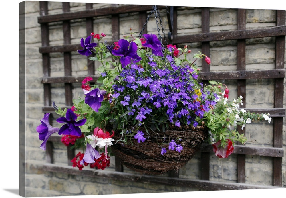 Summer Hanging Basket With Petunia Verbena And Trailing Lobelia