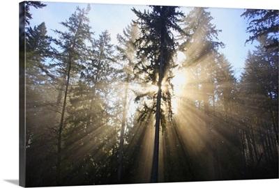 sun shining through morning fog and trees