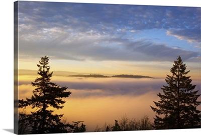 sunrise through morning fog