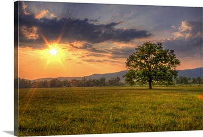 Sunset behind lone tree in field, Great Smoky Mountains National Park.