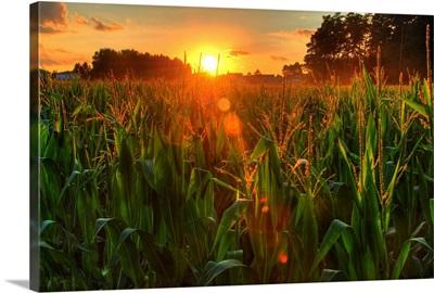 Sunset over late summer harvest of corn.